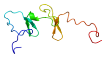 Protein FHL5 PDB 1x68.png