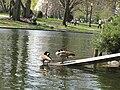 Public Garden Lagoon 6.jpg