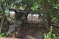 Puma in Parc Zoologique de Paris (19664944676).jpg