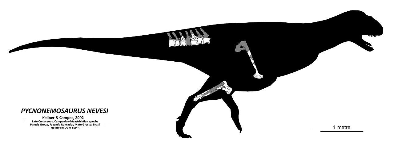 Pycnonemosaurus nevesi skeletal simple.jpg