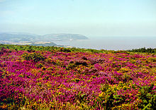 Ground covered with purple heather. In the distance are hills and coastline.
