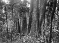 Queensland State Archives 430 Giants Garden Lamington National Park Beaudesert Shire September 1933.png