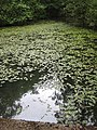 Quiet pool, Forest of Dean - geograph.org.uk - 869089.jpg