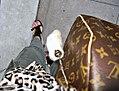 Rabbits foot and toes (4785142989).jpg