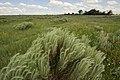 Rangeland site in Gray Co. Texas (25023598211).jpg