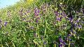 Ratangad Flowers2.jpg
