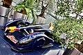 Red Bull racing, Hangar 7, Salzburg ( Ank Kumar) 09.jpg