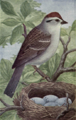 Reed-chipping-sparrow.png
