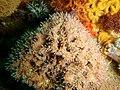 Reef life at the wreck of SAS Pietermaritzburg P7260796.JPG
