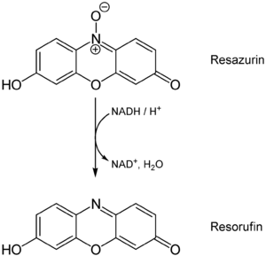 Resazurin - Reduction of resazurin to resorufin in living cells (with NADH)
