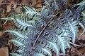 Rhododendronpark Bremen 20090513 197.JPG