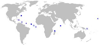 <i>Rhynchactis</i> Genus of fishes