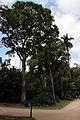 Rio de janeiro, jardim botanico, 01.JPG