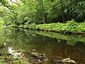 River Dart at Blackmoor Wood - geograph.org.uk - 1354067.jpg