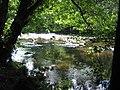 River Nidd near Knaresborough - geograph.org.uk - 28589.jpg