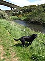 River Tyne, East Linton - geograph.org.uk - 441841.jpg