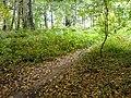Robin Hood Way, near South Lodge - geograph.org.uk - 563774.jpg