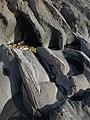 Rocks near The Delvers (2) - geograph.org.uk - 1513087.jpg