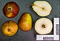 Rode Doyenne van Doorn (pear) jm97171.jpg