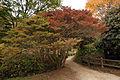 Rokko alpine botanical garden22s5s4272.jpg