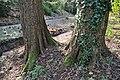 Rombergpark-100331-11468-Bachlauf.jpg