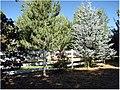 Roses and White Fence, Oak Glen, CA.6-23-12a (7449450060).jpg