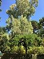 Royal Botanical Garden in Madrid 17.jpg