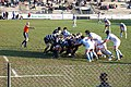 Rugby Roma - Bayonne 23 January 2010 - Scrum.jpg