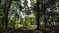 Rumianek - Park (4) - (Q33092699).jpg