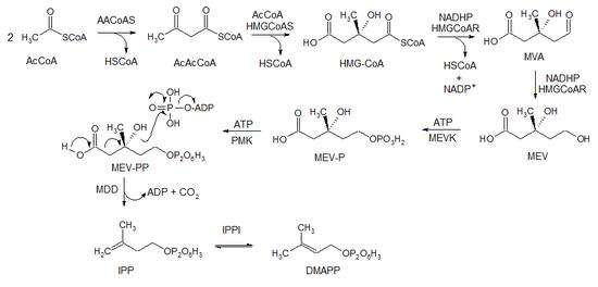 sintesis de isoprenoides y esteroides