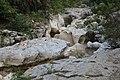 Séran près Cascade Cerveyrieu Artemare 1.jpg