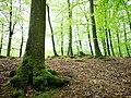 Söderåsen landscape trees.jpg