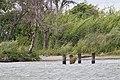 Sacramento-San Joaquin River Delta (14688684236).jpg