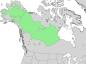 Salix arbusculoides range map 3.png