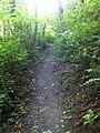 Saltwater State Park Trail 3.jpg