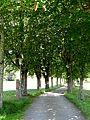 Sankt Märgen, Weg zur Ohmenkapelle 8.jpg