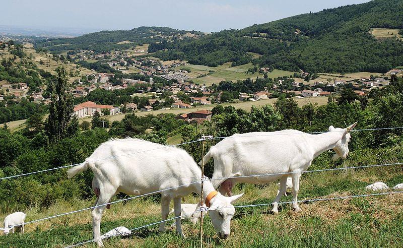 File:Satillieu vue générale avec chèvres.jpg