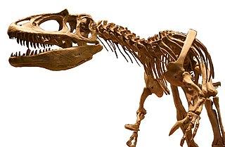 <i>Saurophaganax</i> Allosaurid theropod dinosaur genus from Late Jurassic period