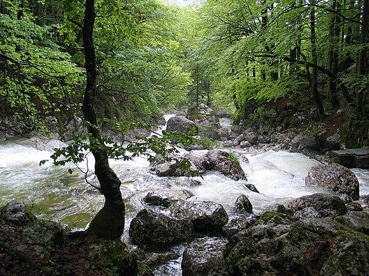 Sava Bohinjka