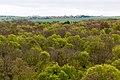Schönstedt, Nationalpark Hainich, Ausblick vom Baumkronenpfad -- 2017 -- 0225.jpg