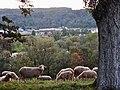 Schafe bei Neckartenzlingen - panoramio.jpg