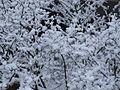 Schnee und Eis auf Zweigen.jpg