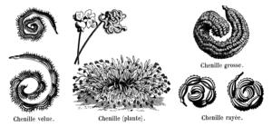 Scorpiurus chenilles Vilmorin-Andrieux 1904.png