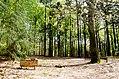 Scoutcentrum Buitenzorg Baarn - panoramio (3).jpg