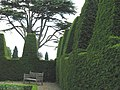 Sculptured hedge at Nymans - geograph.org.uk - 1458300.jpg