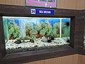 Sea urchin-1-fishery museum-port blair-andaman-India.jpg