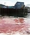 Seafood waste Sitka AK 2003.jpg