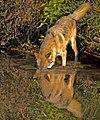 Self-Service Wolf Wash... (30516103946).jpg