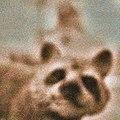Self portrait with raccoon.jpg