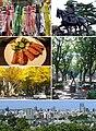 Sendai montage.jpg